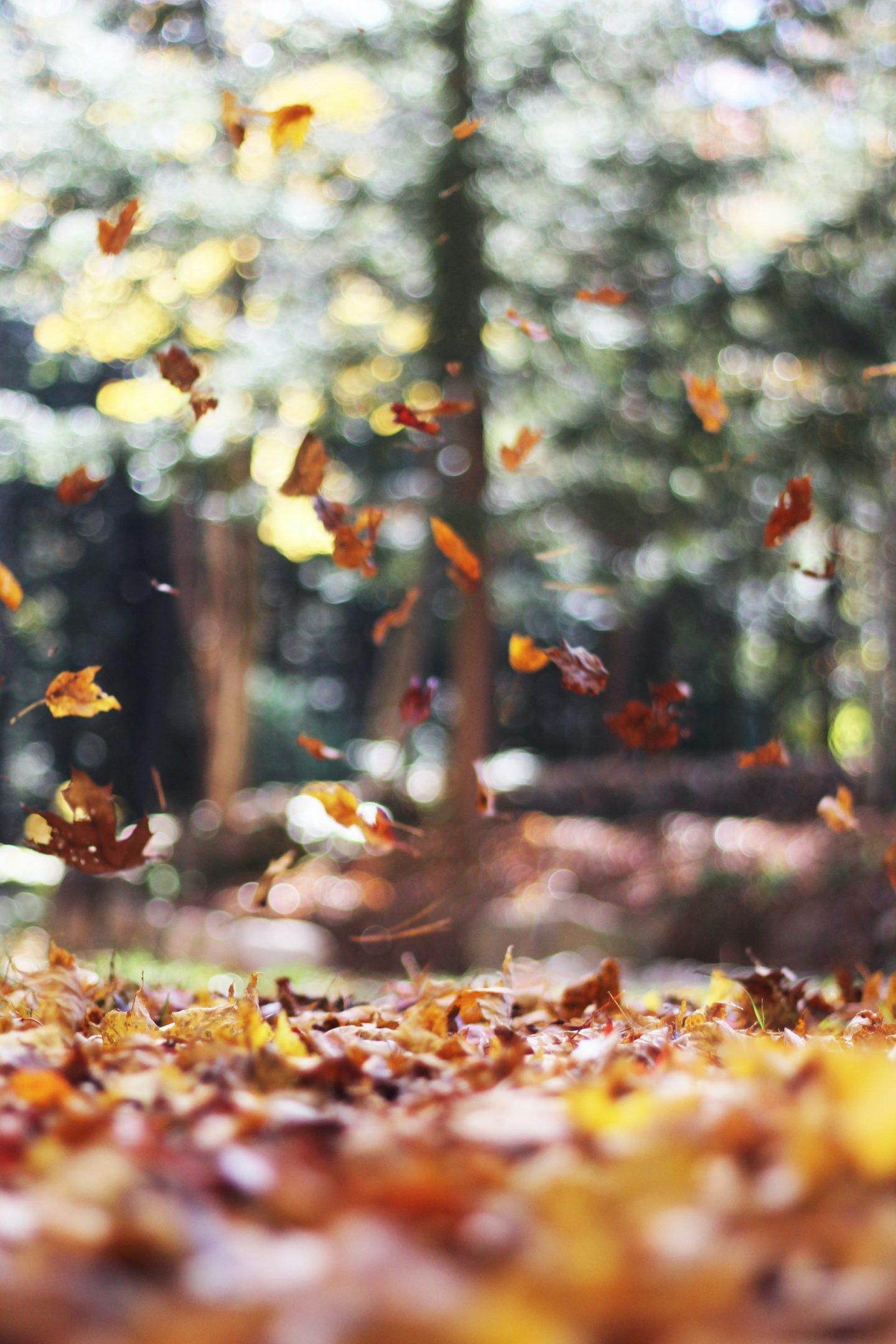 Autumn Chill Playlist
