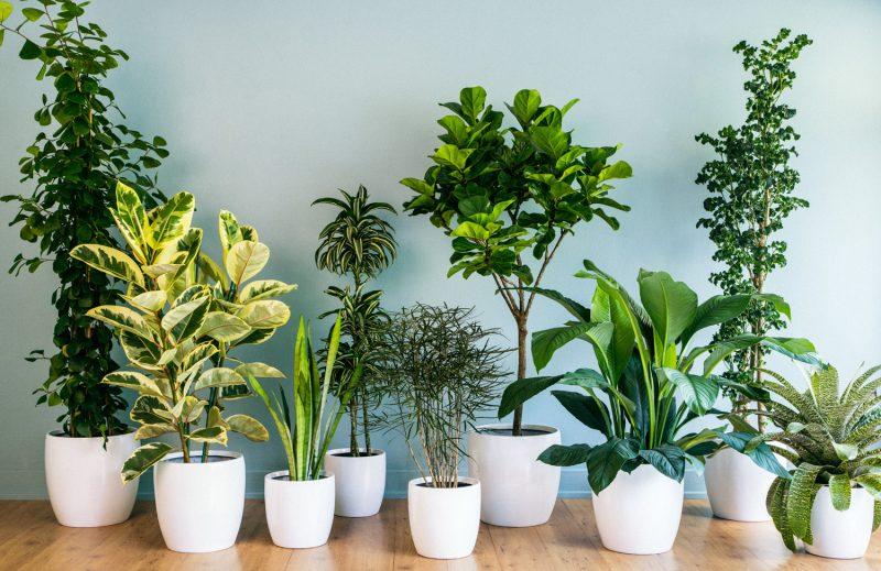 8 Low Maintenance House Plants